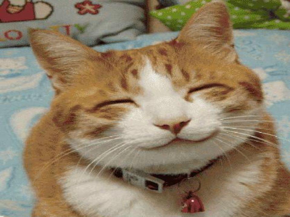 E allora … Avete sorriso oggi .