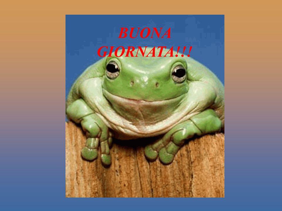 Ora, non vi resta che far sorridere i vostri amici … E nel caso in cui nessuno vi abbia ancora fatto un sorriso oggi...