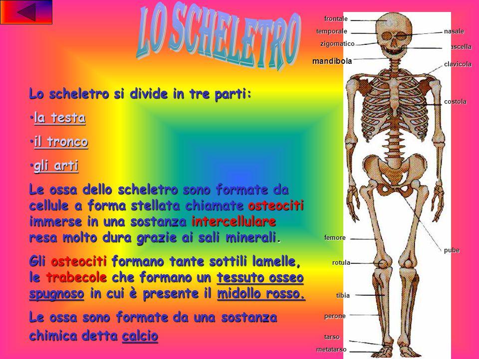 Lo scheletro Le anomalie delle ossaLe anomalie delle ossa Le ossa piatte, lunghe e corteLe ossa piatte, lunghe e corte Le articolazioni Conclusione