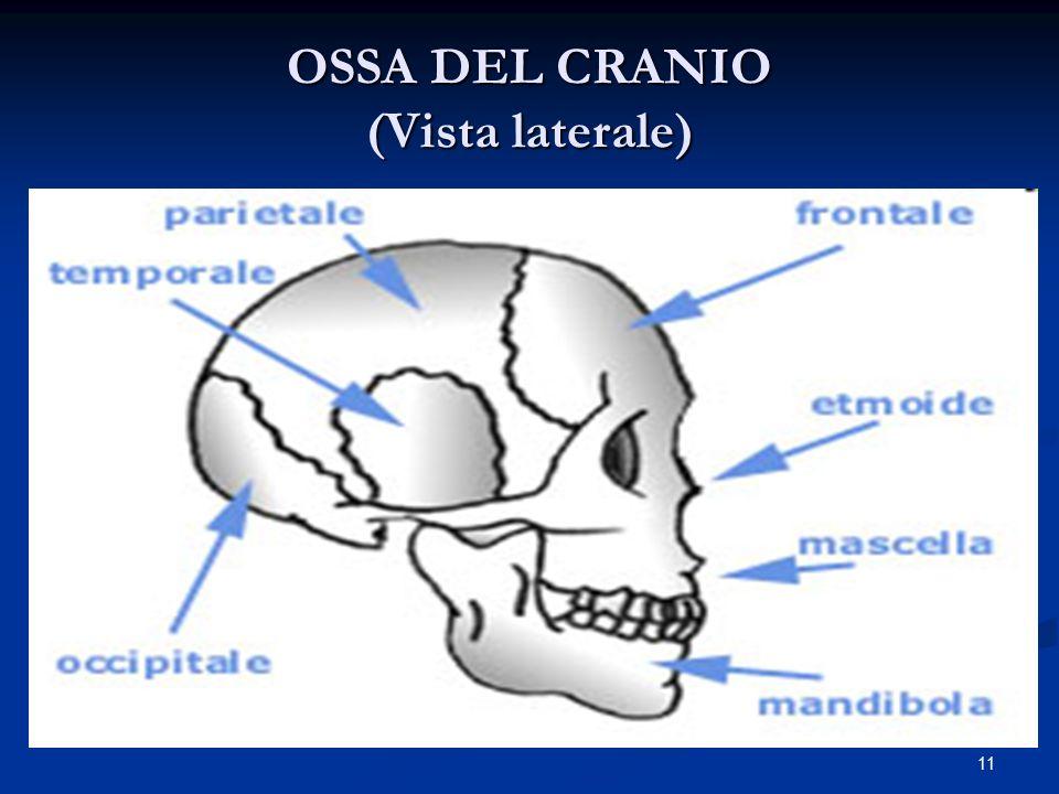 11 OSSA DEL CRANIO (Vista laterale)