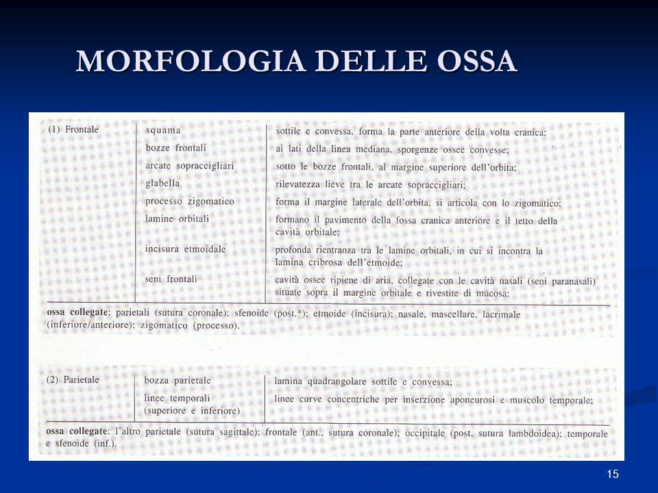 15 MORFOLOGIA DELLE OSSA