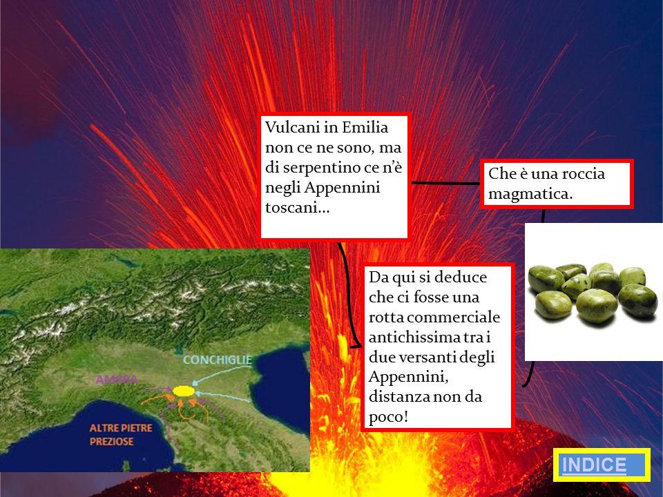 CARATTERISTICHE IMPORTANTI La Venere si può dividere in quattro principali parti.
