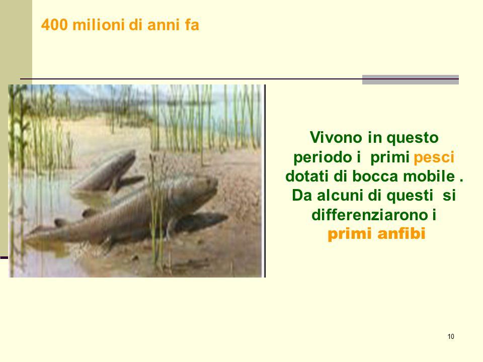 10 Vivono in questo periodo i primi pesci dotati di bocca mobile. Da alcuni di questi si differenziarono i primi anfibi 400 milioni di anni fa