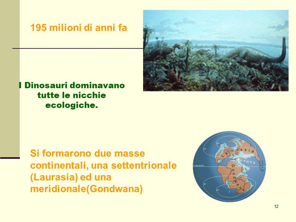 12 I Dinosauri dominavano tutte le nicchie ecologiche. 195 milioni di anni fa Si formarono due masse continentali, una settentrionale (Laurasia) ed un