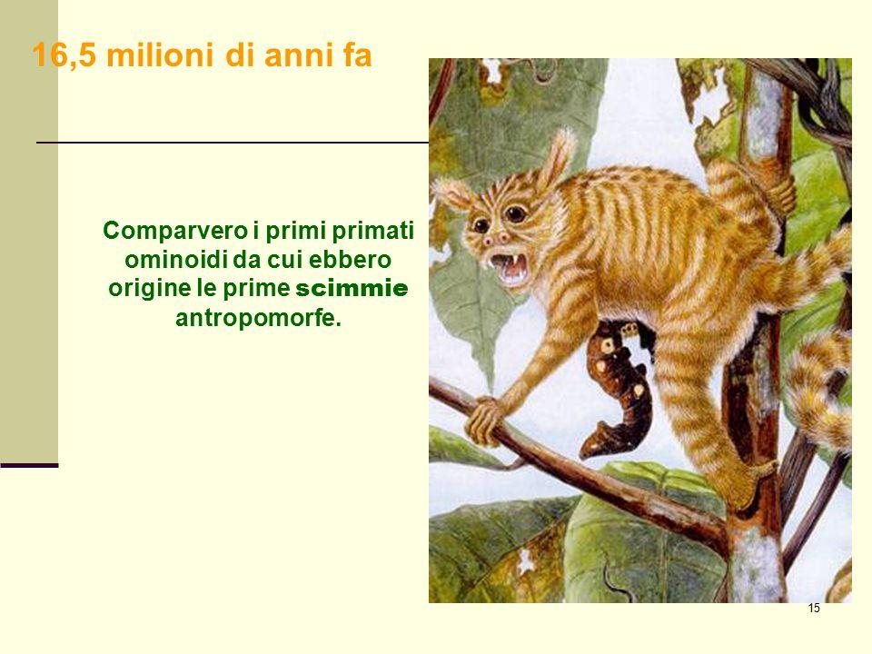 15 Comparvero i primi primati ominoidi da cui ebbero origine le prime scimmie antropomorfe. 16,5 milioni di anni fa