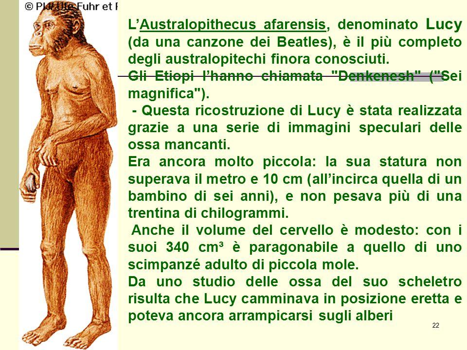 22 L'Australopithecus afarensis, denominato Lucy (da una canzone dei Beatles), è il più completo degli australopitechi finora conosciuti. Gli Etiopi l