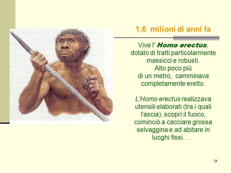 24 1.6 milioni di anni fa Vive l' Homo erectus, dotato di tratti particolarmente massicci e robusti. Alto poco più di un metro, camminava completament