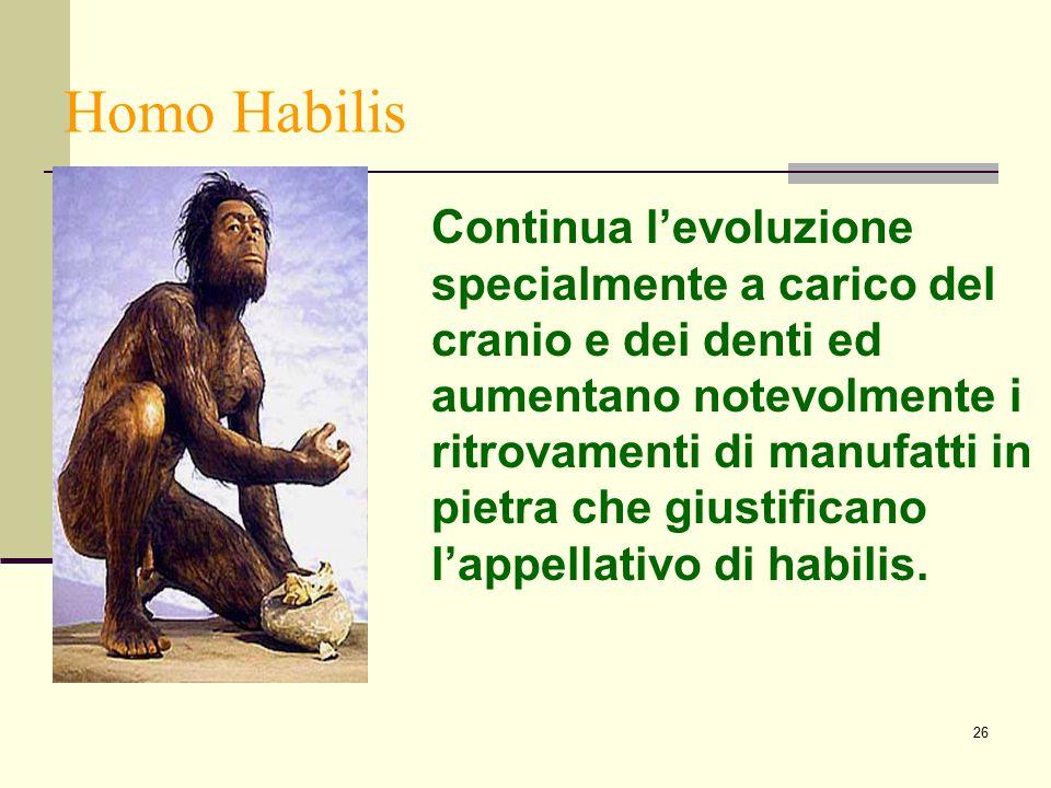 26 Homo Habilis Continua l'evoluzione specialmente a carico del cranio e dei denti ed aumentano notevolmente i ritrovamenti di manufatti in pietra che