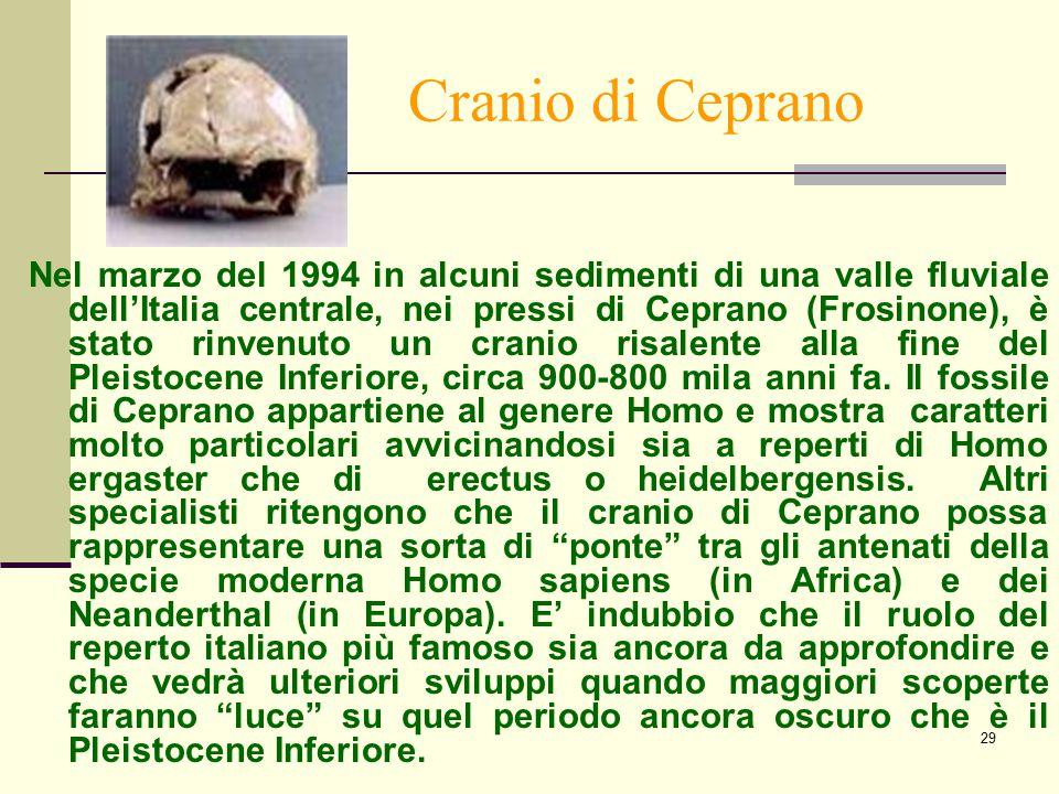 29 Cranio di Ceprano Nel marzo del 1994 in alcuni sedimenti di una valle fluviale dell'Italia centrale, nei pressi di Ceprano (Frosinone), è stato rin