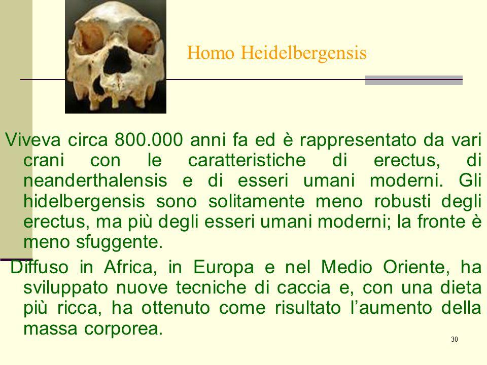 30 Homo Heidelbergensis Viveva circa 800.000 anni fa ed è rappresentato da vari crani con le caratteristiche di erectus, di neanderthalensis e di esse