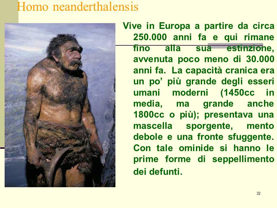 32 Homo neanderthalensis Vive in Europa a partire da circa 250.000 anni fa e qui rimane fino alla sua estinzione, avvenuta poco meno di 30.000 anni fa