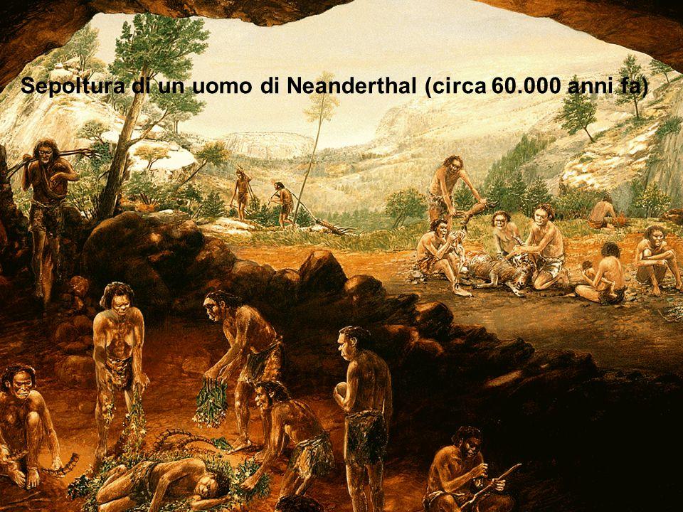 33 Sepoltura di un uomo di Neanderthal (circa 60.000 anni fa )