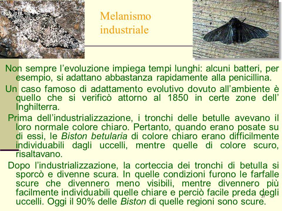 37 Melanismo industriale Non sempre l'evoluzione impiega tempi lunghi: alcuni batteri, per esempio, si adattano abbastanza rapidamente alla penicillin