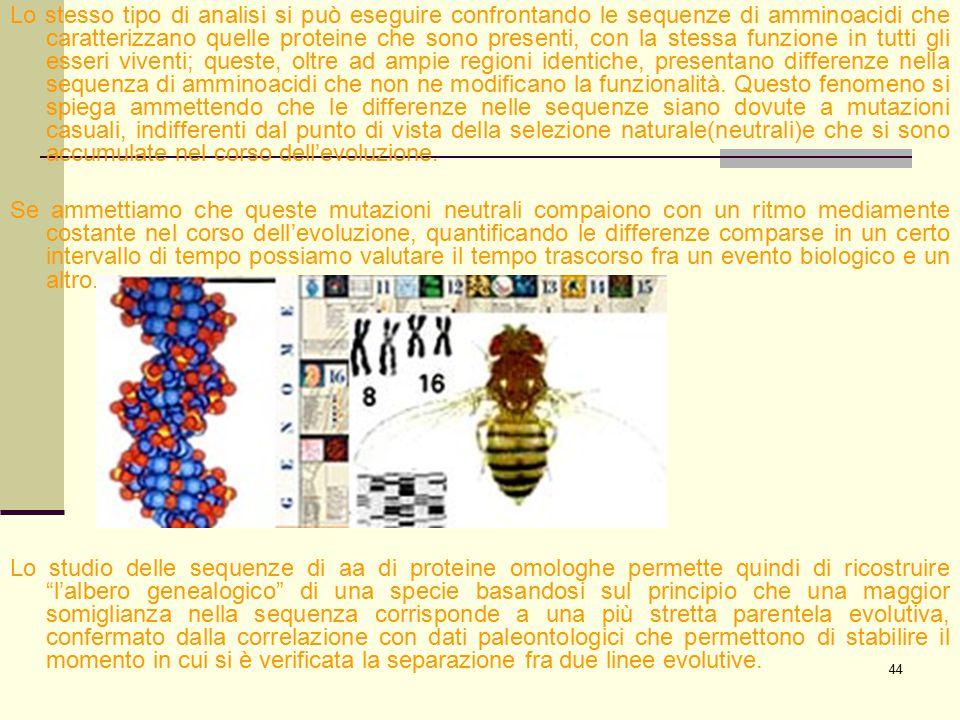 44 Lo stesso tipo di analisi si può eseguire confrontando le sequenze di amminoacidi che caratterizzano quelle proteine che sono presenti, con la stes