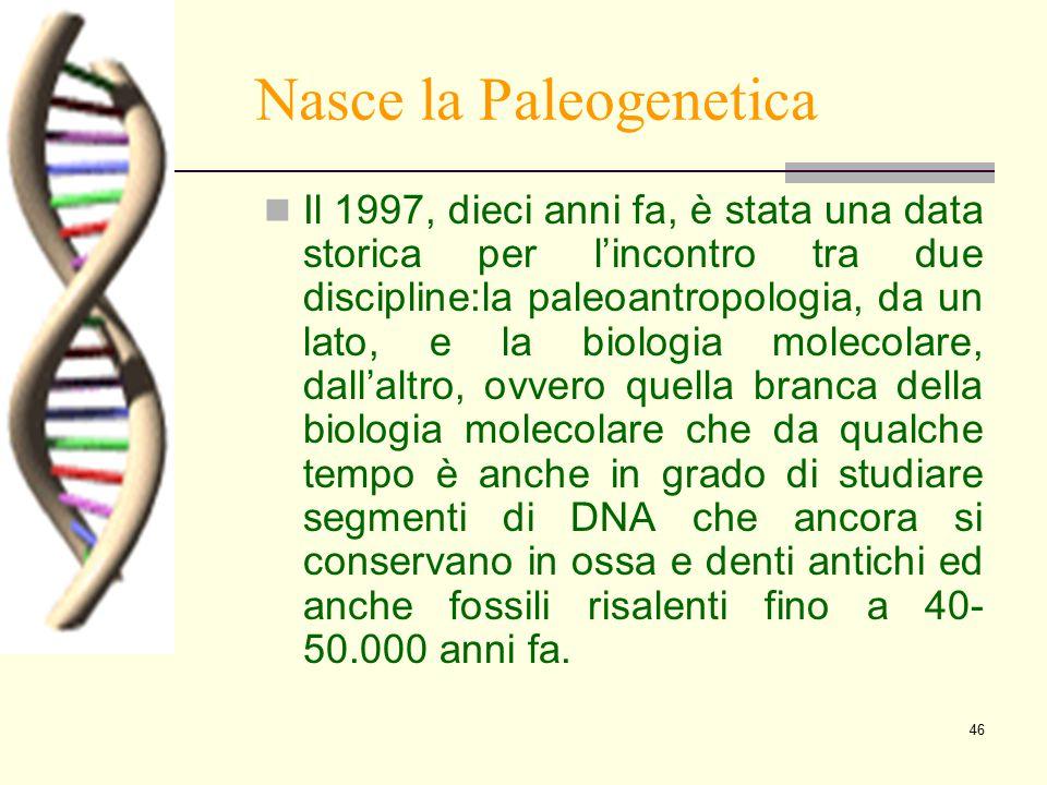 46 Nasce la Paleogenetica Il 1997, dieci anni fa, è stata una data storica per l'incontro tra due discipline:la paleoantropologia, da un lato, e la bi