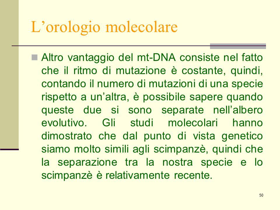 50 L'orologio molecolare Altro vantaggio del mt-DNA consiste nel fatto che il ritmo di mutazione è costante, quindi, contando il numero di mutazioni d