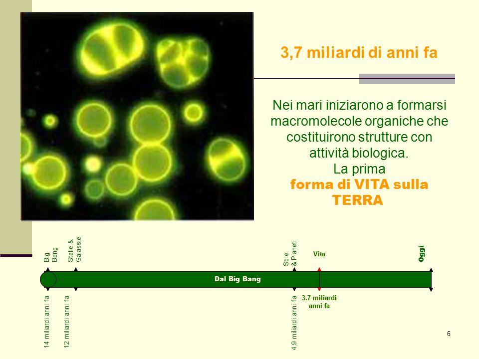 37 Melanismo industriale Non sempre l'evoluzione impiega tempi lunghi: alcuni batteri, per esempio, si adattano abbastanza rapidamente alla penicillina.