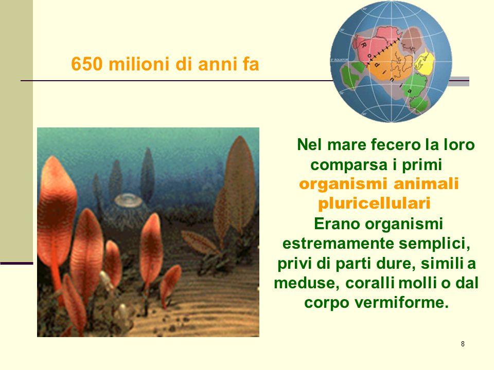 9 Si differenziò la maggior parte degli attuali gruppi di invertebrati pluricellulari, spugne, madrepore e meduse, vermi segmentati, molluschi, artropodi dotati di un robusto scheletro esterno.