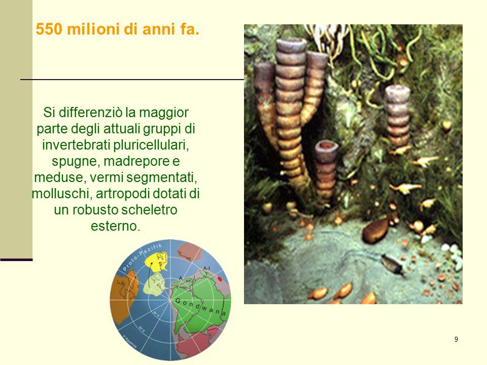 9 Si differenziò la maggior parte degli attuali gruppi di invertebrati pluricellulari, spugne, madrepore e meduse, vermi segmentati, molluschi, artrop