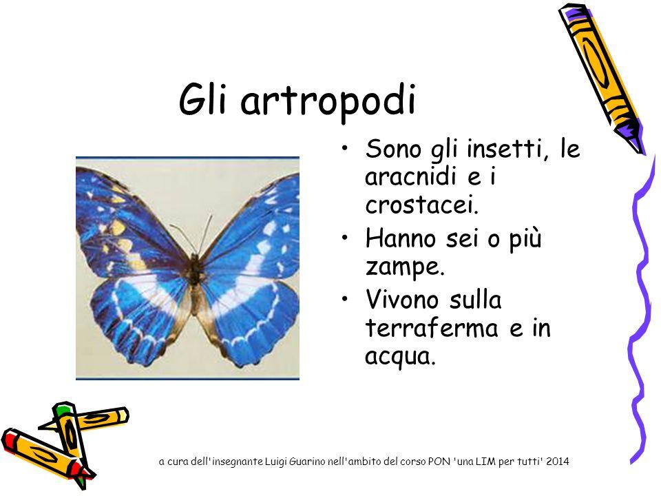 Gli artropodi Sono gli insetti, le aracnidi e i crostacei. Hanno sei o più zampe. Vivono sulla terraferma e in acqua. a cura dell'insegnante Luigi Gua