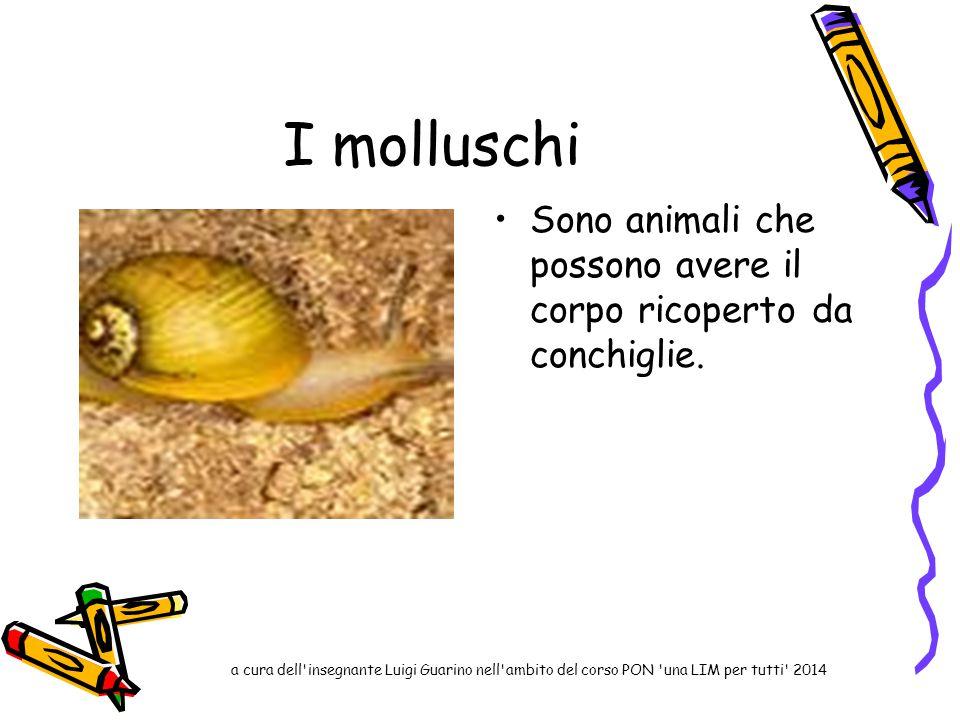 I molluschi Sono animali che possono avere il corpo ricoperto da conchiglie. a cura dell'insegnante Luigi Guarino nell'ambito del corso PON 'una LIM p