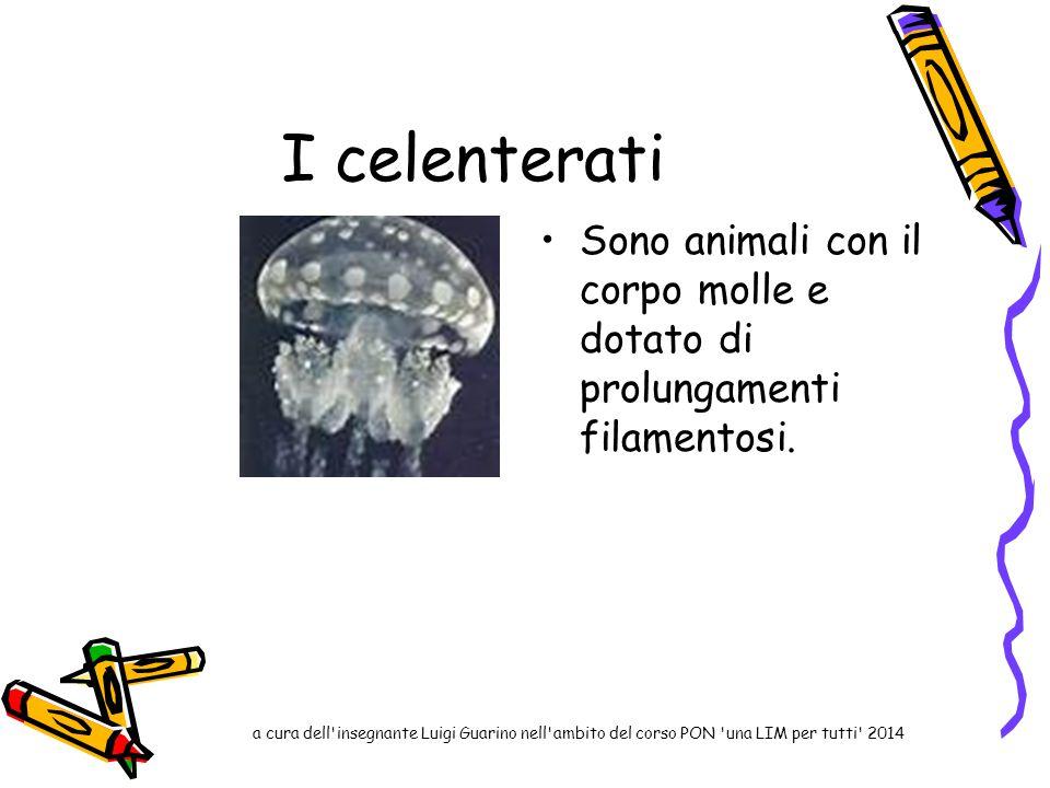 I celenterati Sono animali con il corpo molle e dotato di prolungamenti filamentosi. a cura dell'insegnante Luigi Guarino nell'ambito del corso PON 'u