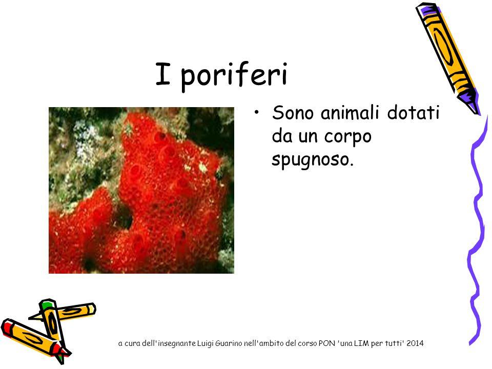 I poriferi Sono animali dotati da un corpo spugnoso. a cura dell'insegnante Luigi Guarino nell'ambito del corso PON 'una LIM per tutti' 2014