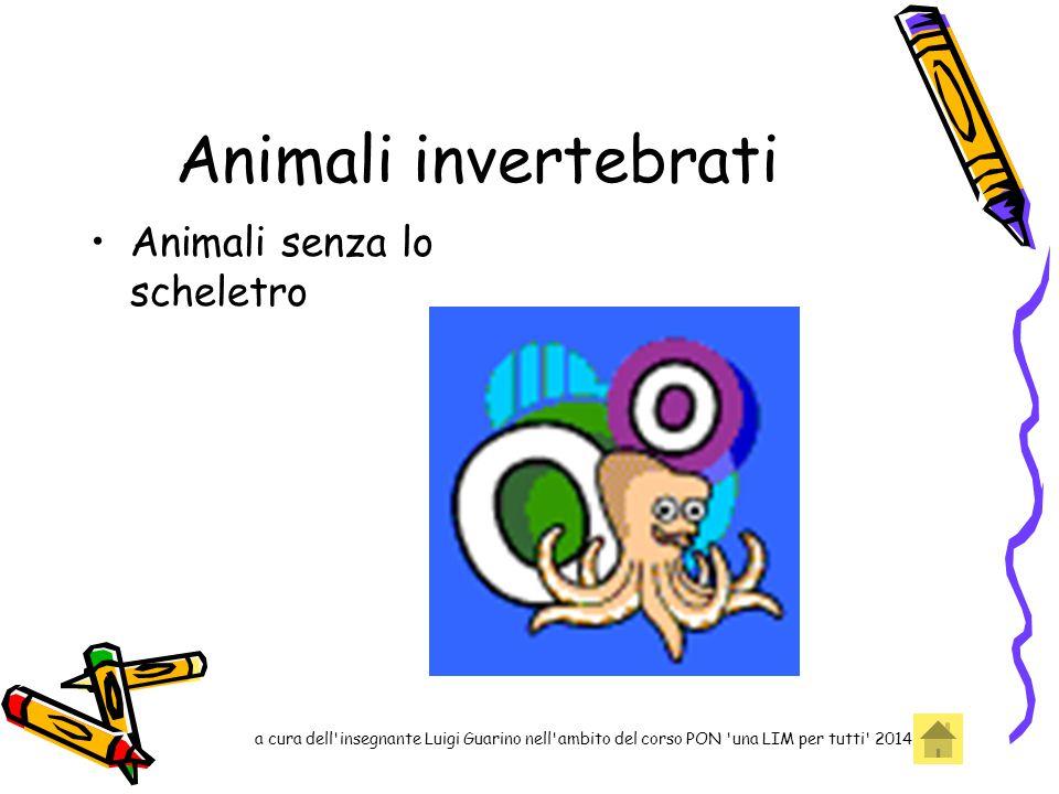 Animali invertebrati Animali senza lo scheletro a cura dell'insegnante Luigi Guarino nell'ambito del corso PON 'una LIM per tutti' 2014