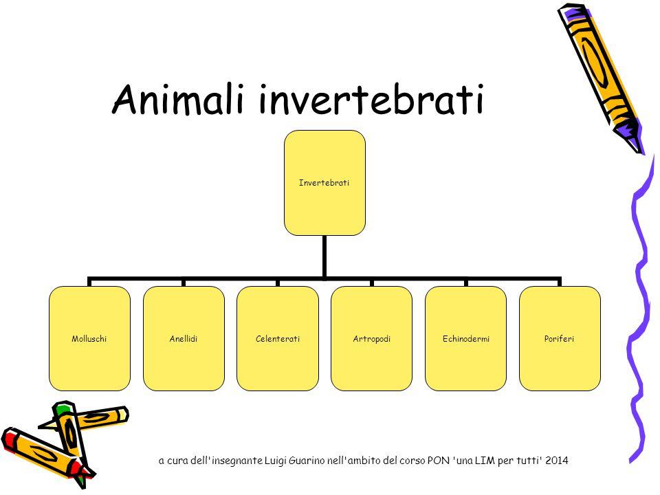 Animali invertebrati Invertebrati MolluschiAnellidiCelenteratiArtropodiEchinodermiPoriferi a cura dell'insegnante Luigi Guarino nell'ambito del corso