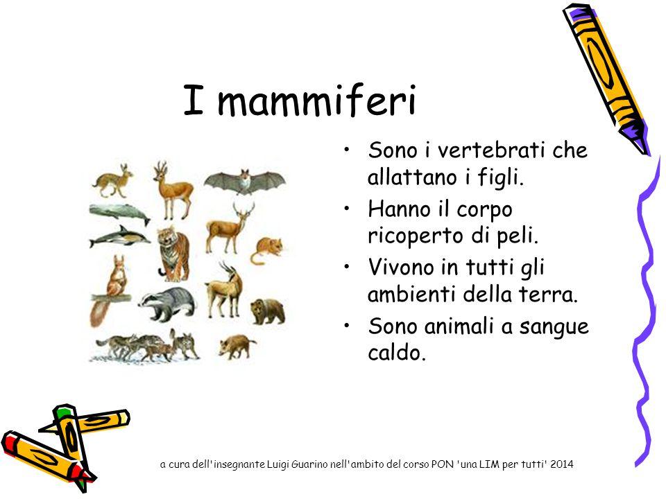 I mammiferi Sono i vertebrati che allattano i figli. Hanno il corpo ricoperto di peli. Vivono in tutti gli ambienti della terra. Sono animali a sangue