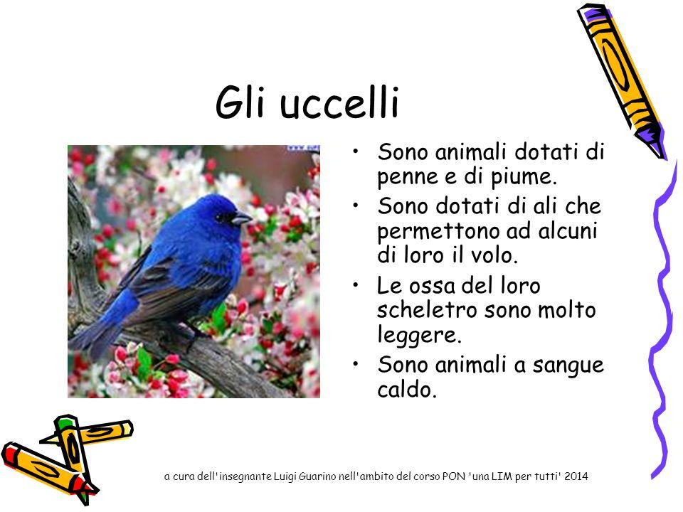 Gli uccelli Sono animali dotati di penne e di piume. Sono dotati di ali che permettono ad alcuni di loro il volo. Le ossa del loro scheletro sono molt