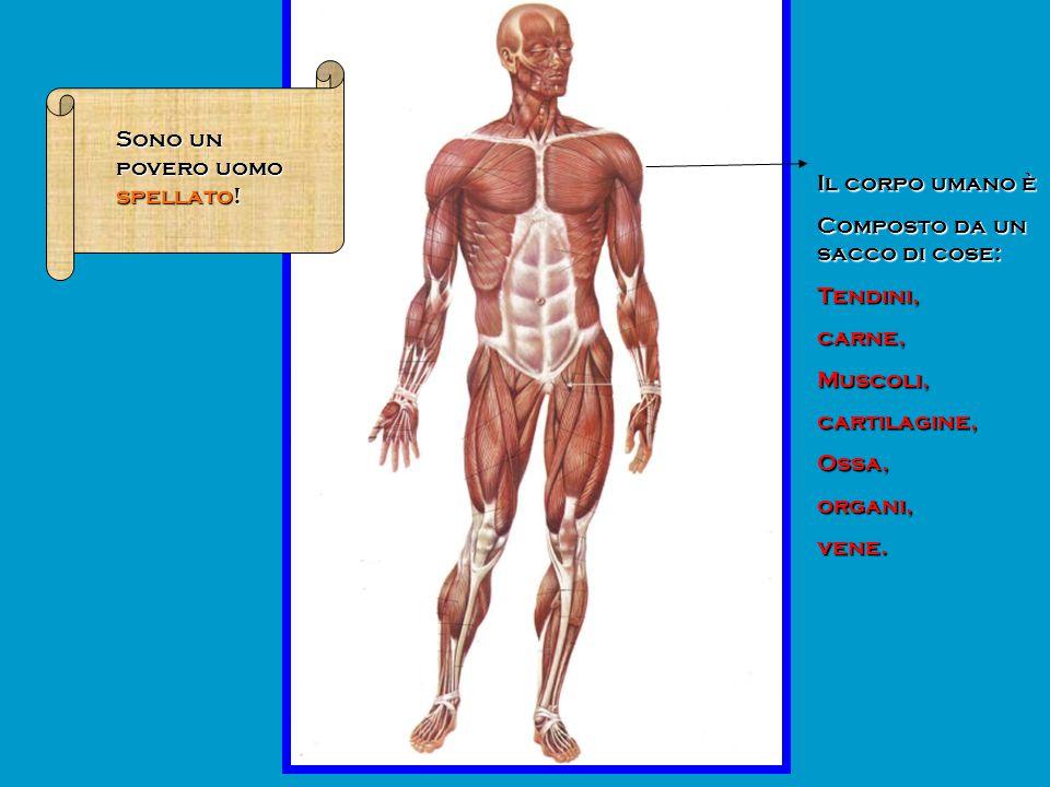 Il corpo umano è Composto da un sacco di cose: Tendini,carne,Muscoli,cartilagine,Ossa,organi,vene. Sono un povero uomo spellato!