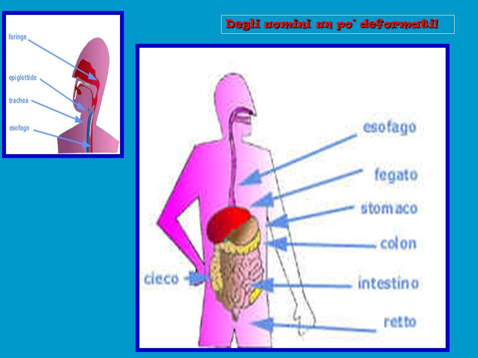 Il diaframma: è un muscolo sopra lo stomaco e il fegato. I cantanti devono esercitarlo un sacco!