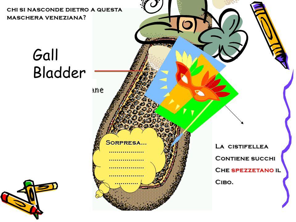 Gall Bladder La cistifellea Contiene succhi Che spezzetano il Cibo. Sorpresa… ……………… ……………… ……………… ……………… ………… chi si nasconde dietro a questa mascher