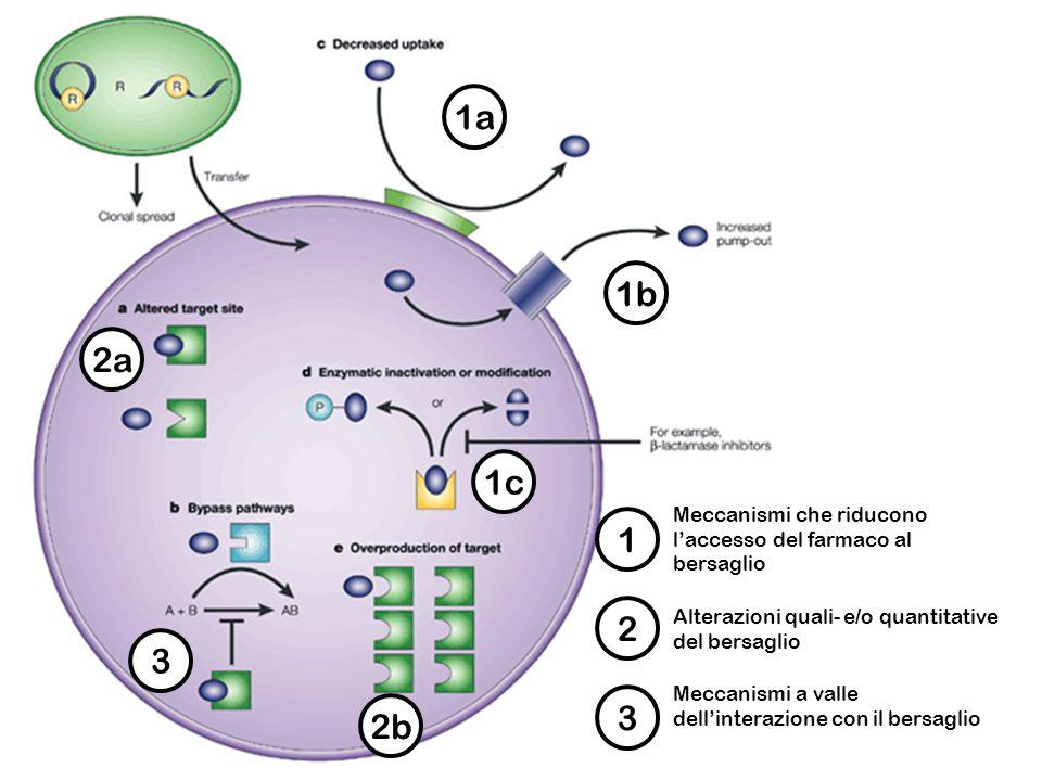 1a 1 Meccanismi che riducono l'accesso del farmaco al bersaglio 1b 1c 2a 2b 2 Alterazioni quali- e/o quantitative del bersaglio 3 3 Meccanismi a valle dell'interazione con il bersaglio