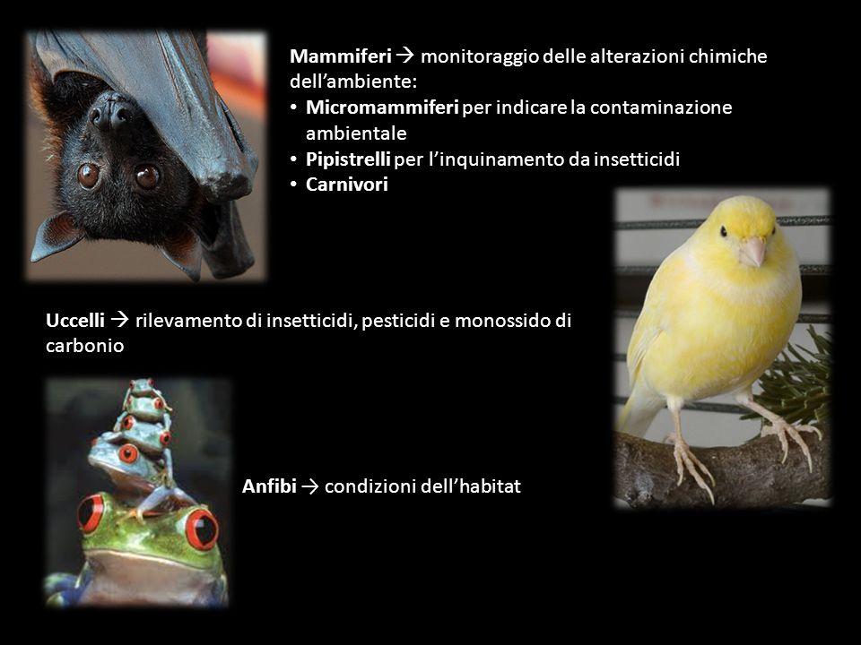 Anfibi → condizioni dell'habitat Uccelli  rilevamento di insetticidi, pesticidi e monossido di carbonio Mammiferi  monitoraggio delle alterazioni ch