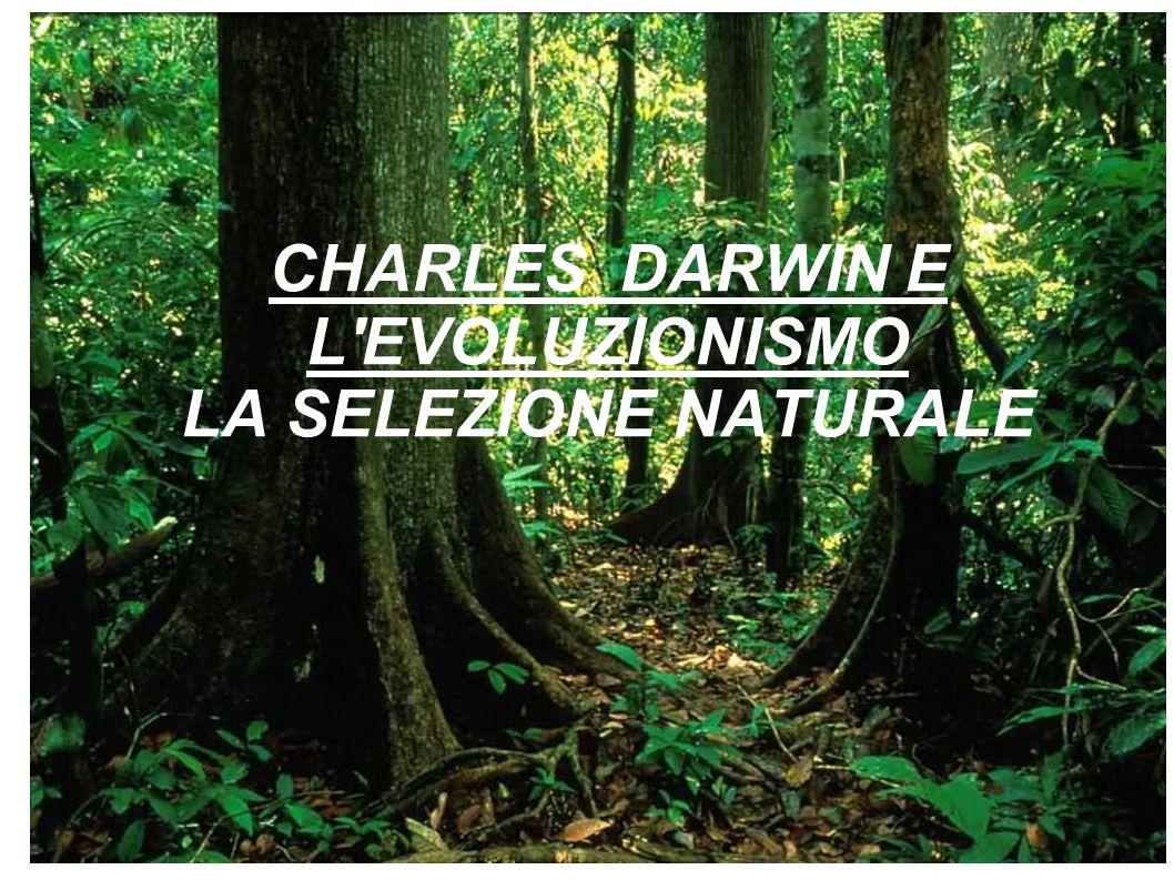 CHARLES DARWIN E L'EVOLUZIONISMO LA SELEZIONE NATURALE