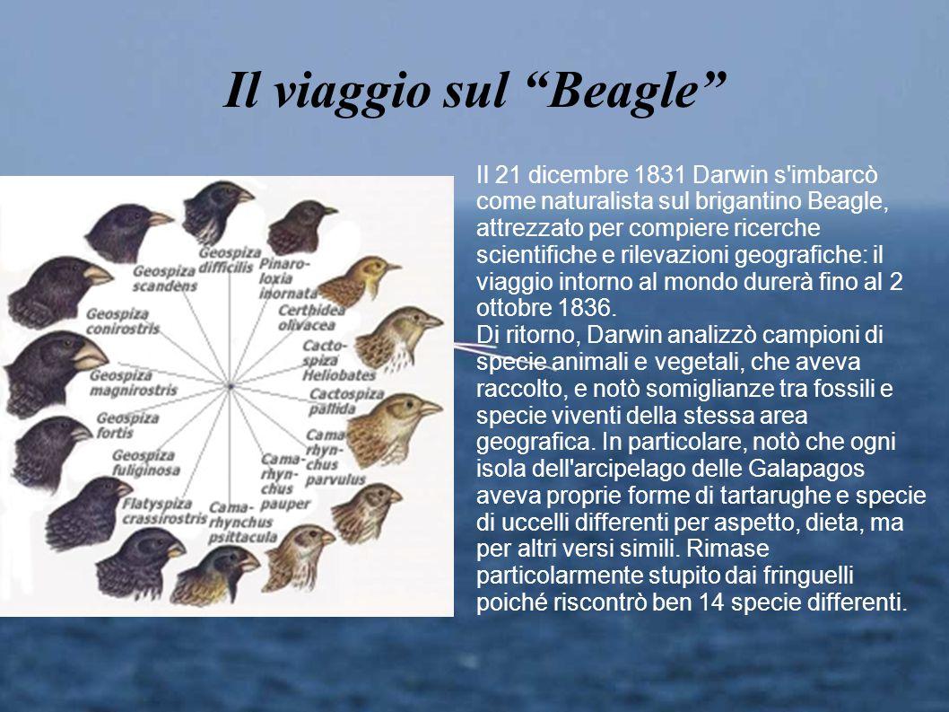 """Il viaggio sul """"Beagle"""" Il 21 dicembre 1831 Darwin s'imbarcò come naturalista sul brigantino Beagle, attrezzato per compiere ricerche scientifiche e r"""