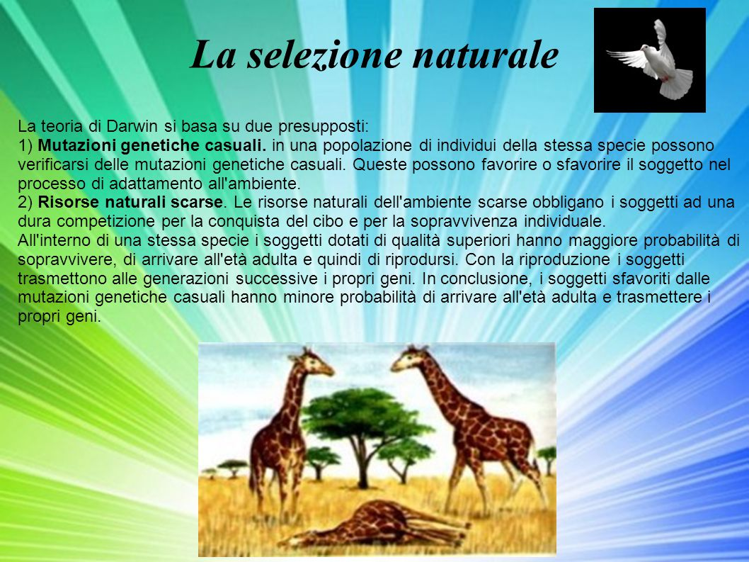 La selezione naturale La teoria di Darwin si basa su due presupposti: 1) Mutazioni genetiche casuali. in una popolazione di individui della stessa spe