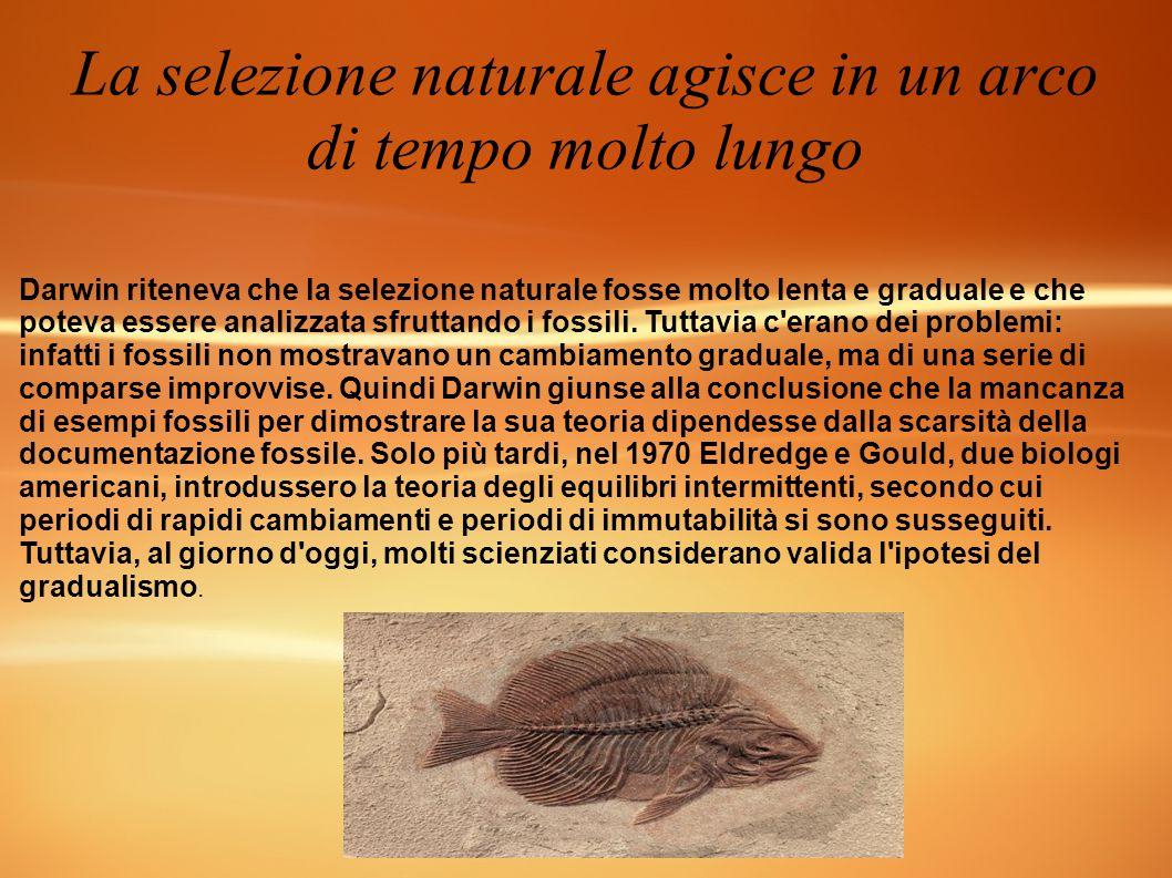 La selezione naturale agisce in un arco di tempo molto lungo Darwin riteneva che la selezione naturale fosse molto lenta e graduale e che poteva esser