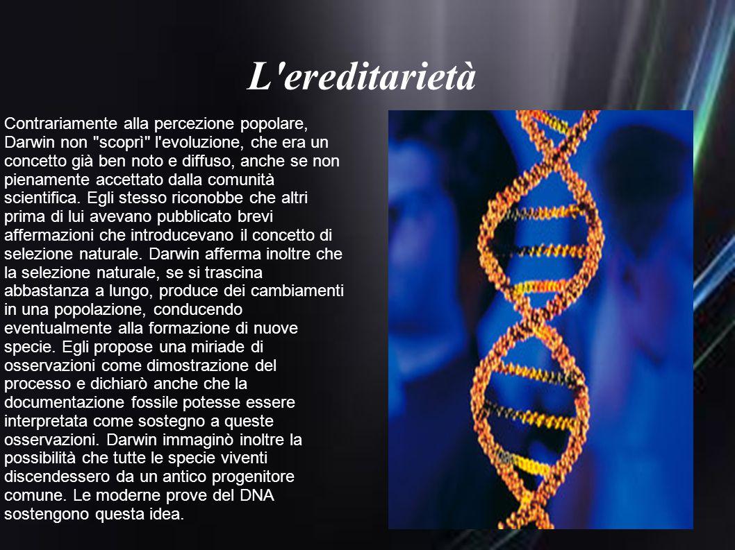 L'ereditarietà Contrariamente alla percezione popolare, Darwin non