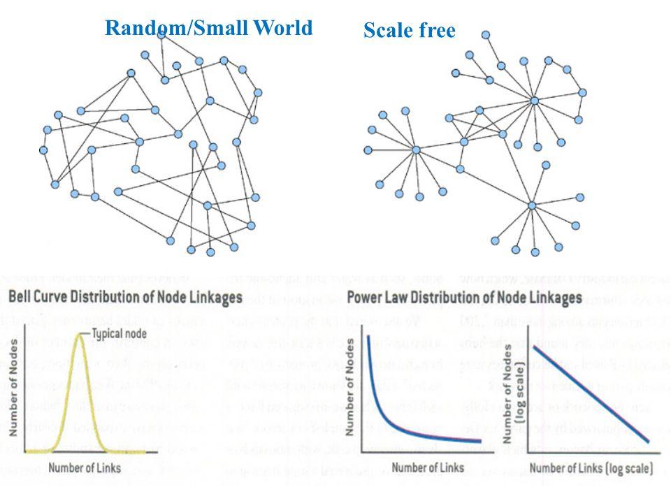Robustezza rispetto ad attacchi casuali Vulnerabilità rispetto ad attacchi selettivi Implicazioni della presenza di centri (hub)
