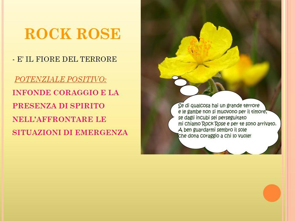 ROCK ROSE - E' IL FIORE DEL TERRORE POTENZIALE POSITIVO: INFONDE CORAGGIO E LA PRESENZA DI SPIRITO NELL'AFFRONTARE LE SITUAZIONI DI EMERGENZA