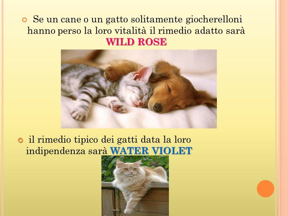 WILD ROSE Se un cane o un gatto solitamente giocherelloni hanno perso la loro vitalità il rimedio adatto sarà WILD ROSE WATER VIOLET il rimedio tipico