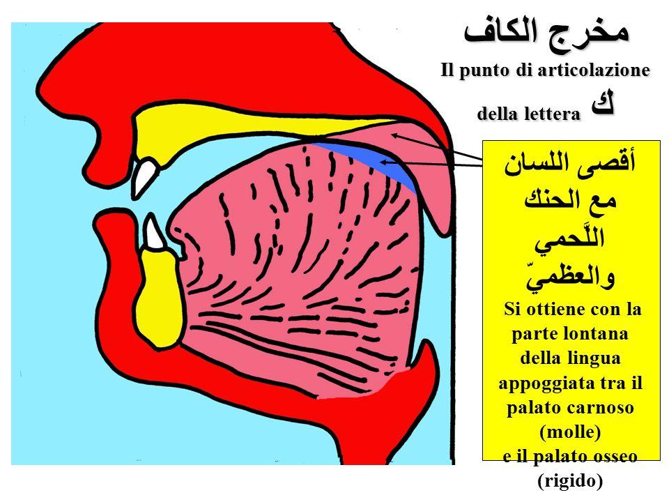 مخرج الكاف Il punto di articolazione della lettera ك أقصى اللسان مع الحنك اللَّحمي والعظميّ Si ottiene con la parte lontana della lingua appoggiata tr