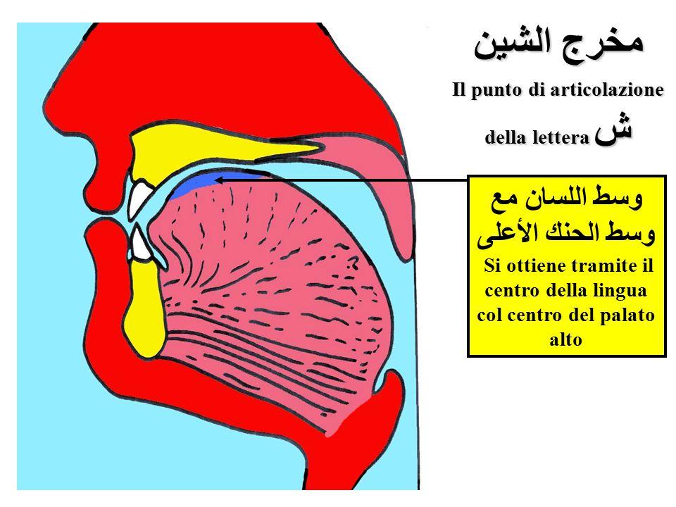 مخرج الشين Il punto di articolazione della lettera ش وسط اللسان مع وسط الحنك الأعلى Si ottiene tramite il centro della lingua col centro del palato al