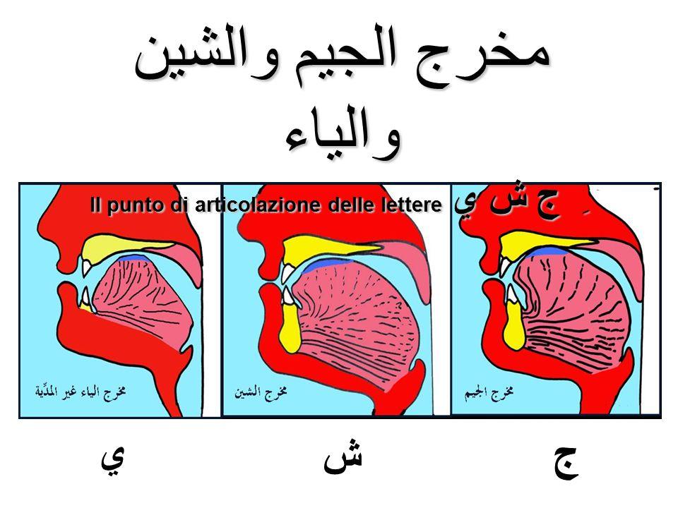 مخرج الجيم والشين والياء Il punto di articolazione delle lettere ِ ج ش ي ش ج ي