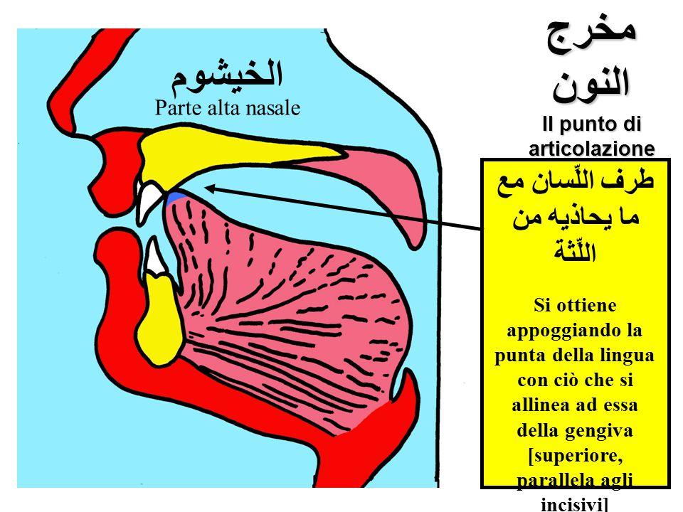 مخرج النون Il punto di articolazione della lettera ن الخيشوم طرف اللِّسان مع ما يحاذيه من اللِّثة Si ottiene appoggiando la punta della lingua con ciò