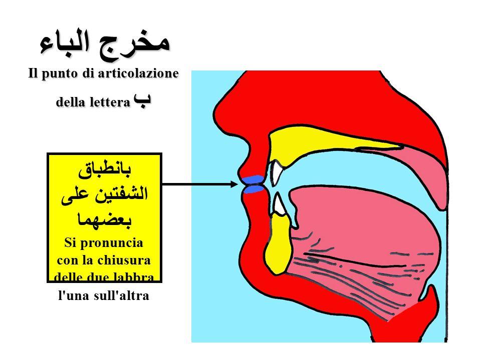 مخرج الباء Il punto di articolazione della lettera ب بانطباق الشفتين على بعضهما Si pronuncia con la chiusura delle due labbra l'una sull'altra