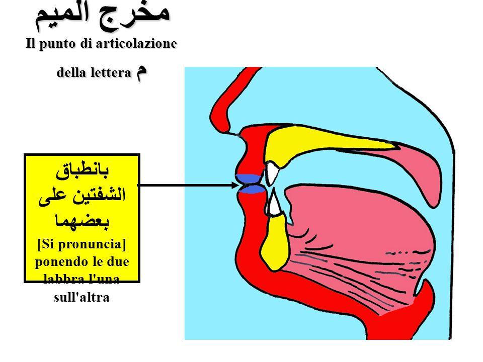 مخرج الميم Il punto di articolazione della lettera م بانطباق الشفتين على بعضهما [Si pronuncia] ponendo le due labbra l'una sull'altra